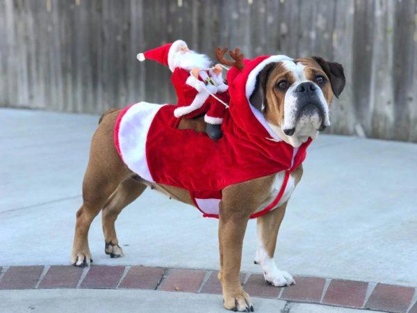 Christmas Costume For Dog - Santa Riding On Dog - 3