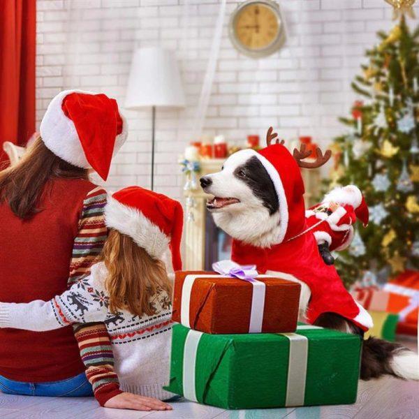 Christmas Costume For Dog - Santa Riding On Dog - 4